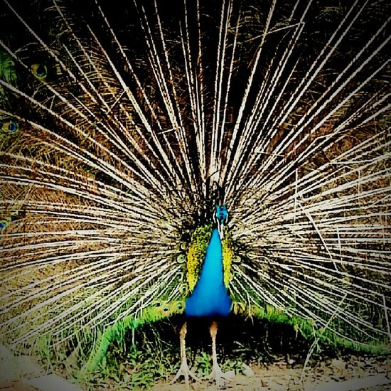 Malaysia Kualalumpur Birdspark Birds Photography Animals Travelphotography Travel Mobile Photography Popular Photos