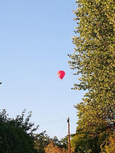 Poplar Tree Red Hot Air Balloon Hot Air Balloon Tree Flying Balloon Mid-air Sky