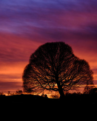 Silhouette trees on field against romantic sky at sunset