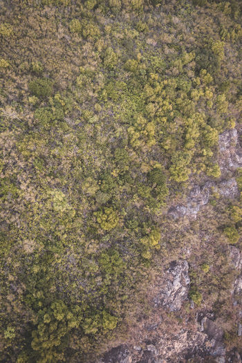 High angle view of trees and rocks in forest
