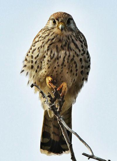 Birdwatching Birds Wildlife Nikon