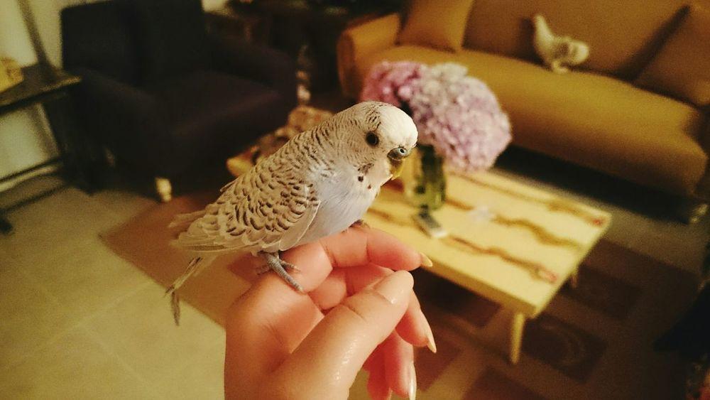 Pet Photography  Bird Blue Hedwig