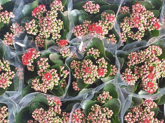 Full frame shot of red flowers for sale in market