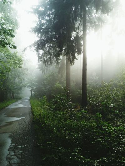 Ein 2tes aus der Reihe Forest Nature Morning Walk Relaxing