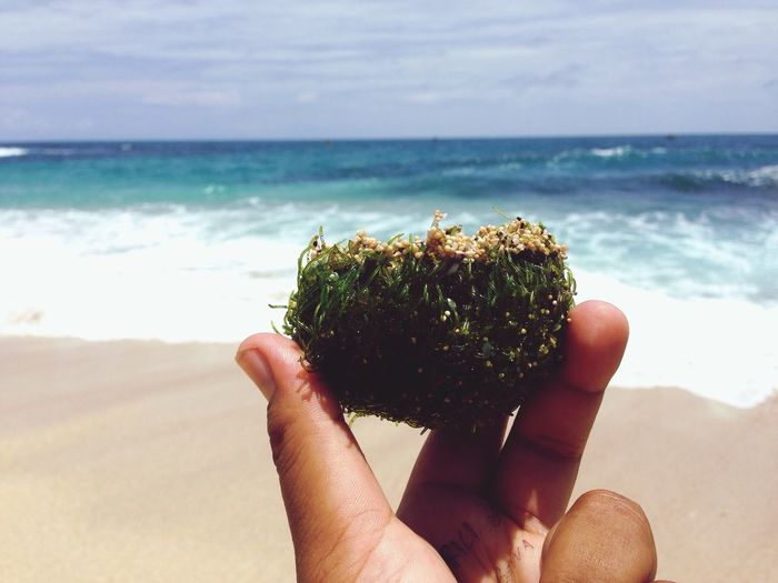Cropped image of hand holding seaweed at beach