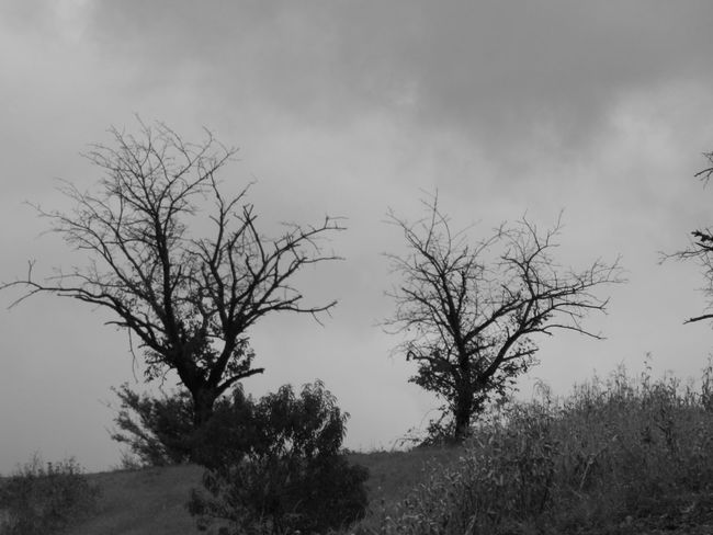 Art Photography Trees Bare Tree Beauty In Nature Blackandwhite Countryside Countryside Landscape Day Grass Landscape Nature No People Outdoors Scenics Sky Tranquil Scene Tranquility Tree