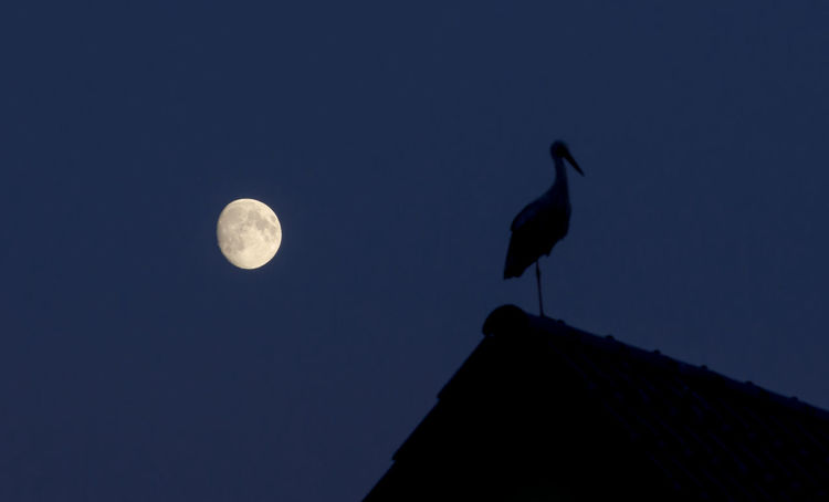 alone with the moon Alone Copy Space EyeEm Best Shots EyeEm Nature Lover Roof Rooftop Animal Themes Animals In The Wild Beauty In Nature Bird Clear Sky Copyspace Long Exposure Low Angle View Moon Nature Night No People One Animal Outdoors Sky Storch