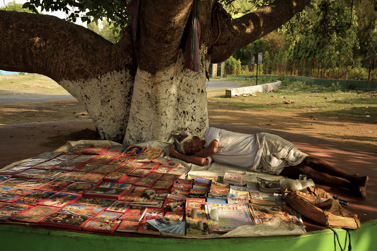 Afternoon Nap Tree Outdoors One Man Only Adult Old Bookseller Bookseller