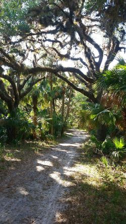 Outdoors Tranquility Shadow No People Beauty In Nature Forest Scenics Nature Tranquil Scene Day Tree Tree Canopy  Florida Deep Woods Hiking