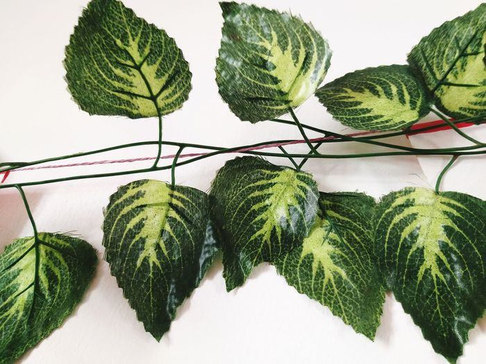 High angle view of green leaf on table