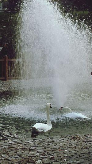 Sonbahar, birisi elini bıraktığında başlar... ( K.Aydemir) .. Nature_collection Swan Lake Ineedamiracle Lostsouls