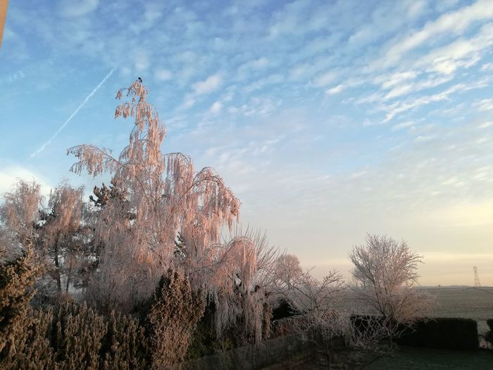 Nature Sky No People Beauty In Nature Tranquility Day Outdoors Tree Moselle France Smartphonephotography Garden Ogy Saint-Agnan Frozen Window View Bedroom View  Plants 🌱