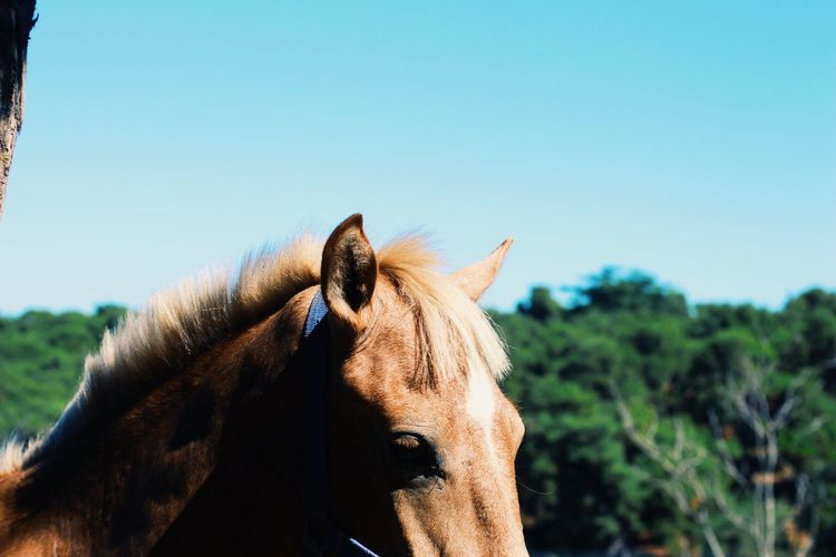 Close-up of a horse against clear sky