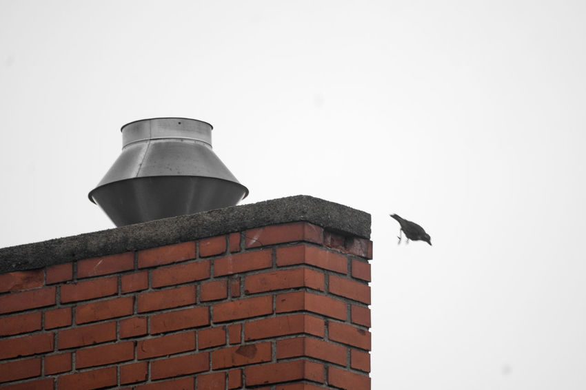 Freiheit #FREIHEITBERLIN Bird Chimney Suicide Free Fall Free Falling Black Bird Roof Top Bricks Pet Portraits The Week On EyeEm