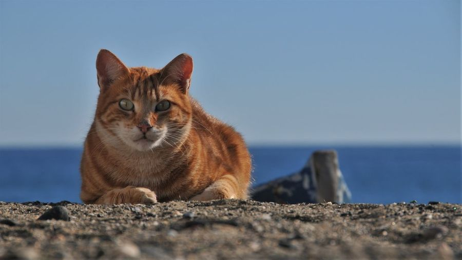 Close-up of cat on rock against sea