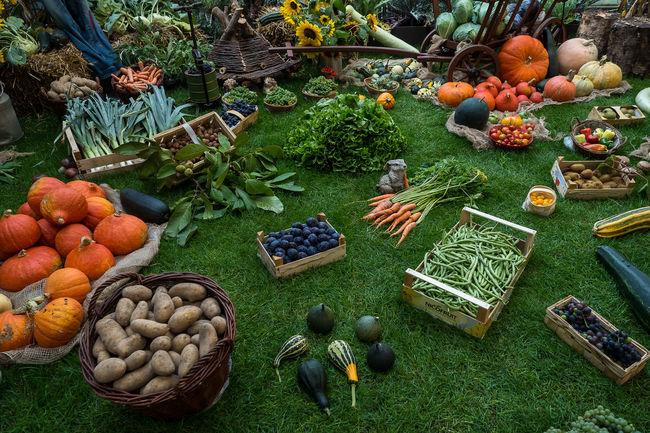 Autumn Colors Decoration Freshness Fruit Fruits Group Of Objects Market Pumpkins Variation Vegetables