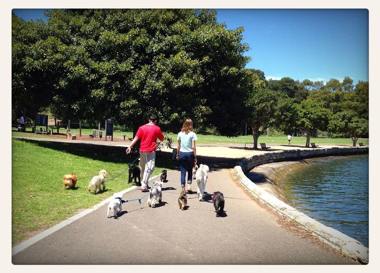 Nice day in Sydney to walk the dogs. Dogwalking Soaking Up The Sun Walking Around Exercising