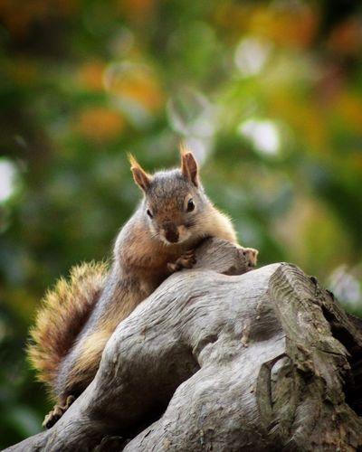 Close-up of squirrel sitting