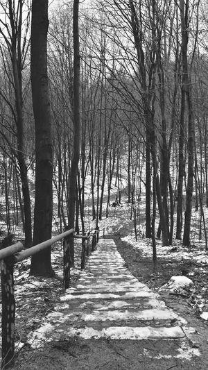 Smartphonephotography Blackandwhite Zielony Las Naturelovers Eyem Nature Lover Winter Forest Nature Black & White Nature Photography