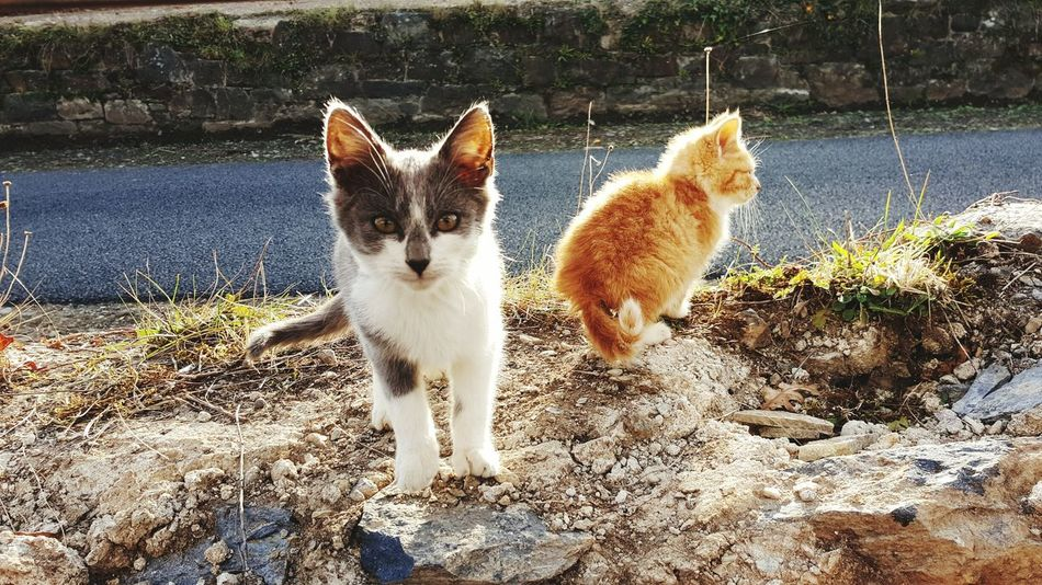 Animal Themes Pets Mammal Domestic Animals Sunlight Outdoors Young Animal No People Day Cats Wild Cats Nature The Great Outdoors - 2017 EyeEm Awards