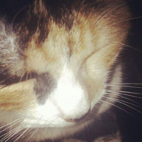 Cali. #tatica #cat Cat Gatica Tatica