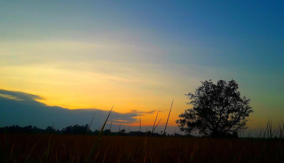 Sunset Tree Sky Scenics Growth Beauty In Nature Nature No People Outdoors Cloud - Sky Thailand🇹🇭 2018 Day EyeEmNewHere Tranquility Beauty❤