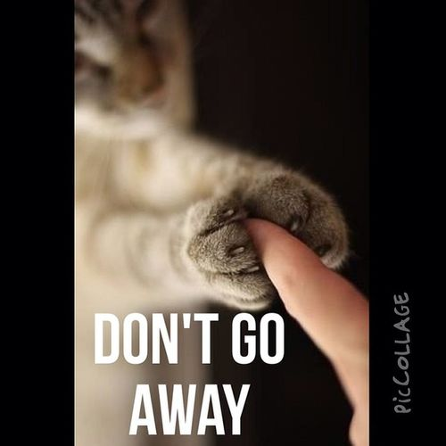 Don't Go Away My Bed PicCollage  Tuseday