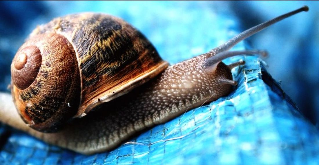 Snail🐌 Life Animals Hi! Check This Out First Eyeem Photo