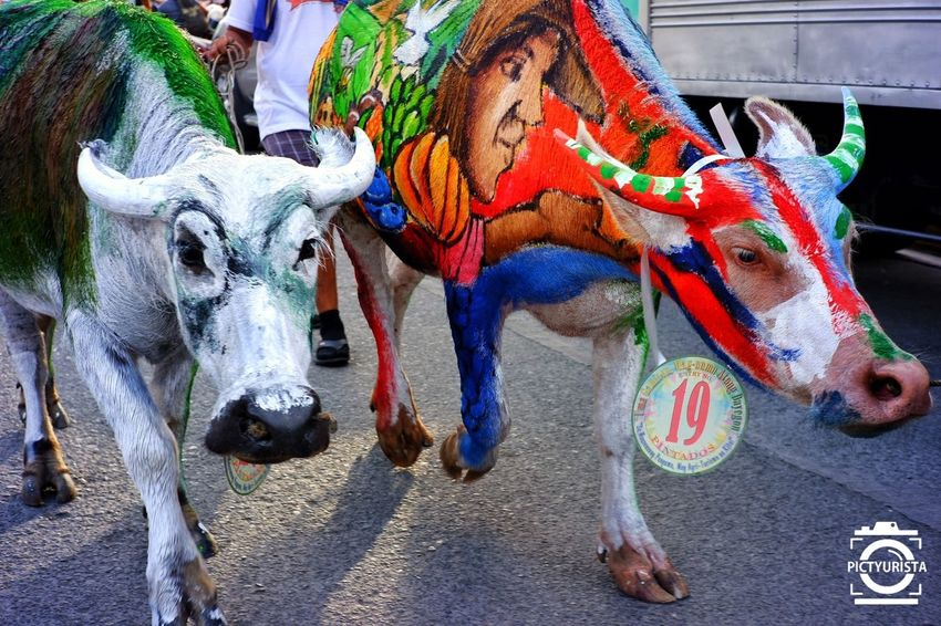"""Mga Kabaw sa Ugmad"" Picture taken during the celebration of Tagum City's 6th Ugmad Festival, featuring Carabao Painting contest : A way in which Tagumeños honor the farmers and a way of giving importance to the different agricultural products of the city. Fujifilm XT100 