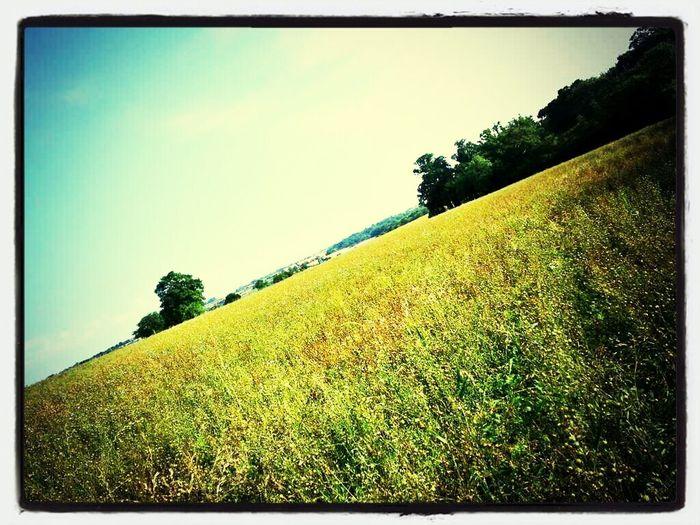 Walks Summer