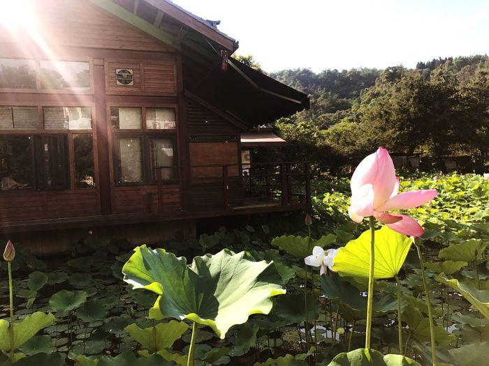 風中殘荷 Flower Day Growth Nature Plant Outdoors Freshness Leaf Tree Fragility Beauty In Nature Building Exterior No People Architecture Clear Sky Flower Head
