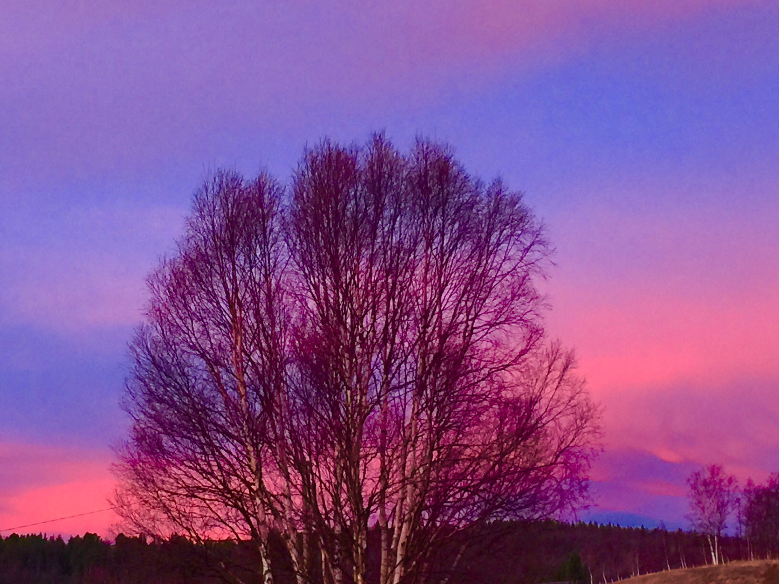 tree, purple, nature, sunset, growth, sky, beauty in nature, no people, tranquility, scenics, outdoors, silhouette, tranquil scene, day