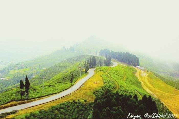 Nepal , so beautiful place . ( Ilam) Kathmandu, Nepal First Eyeem Photo Beautiful Nature