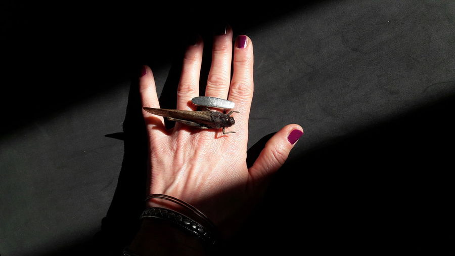 grasshopper on my hand Grasshopper Grasshopper Insect Nature Insect Insect Photography Insect Photo Skin Light And Shadow Black Background Part Of Body One Person Woman Portrait Human Hand Nail Polish Fingernail Shadow Palm Human Finger Ring Close-up Manicure Personal Perspective Finger Low Section Nail Painting Fingernails