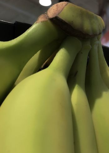 Banana hand. Bananas Hand Of Bananas Green Bananas Freshness Healthy Eating Food Close-up Vertical