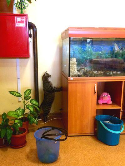 Find a cat! 😺 Cat♡ Cat Cats Catsofinstagram кот котэ