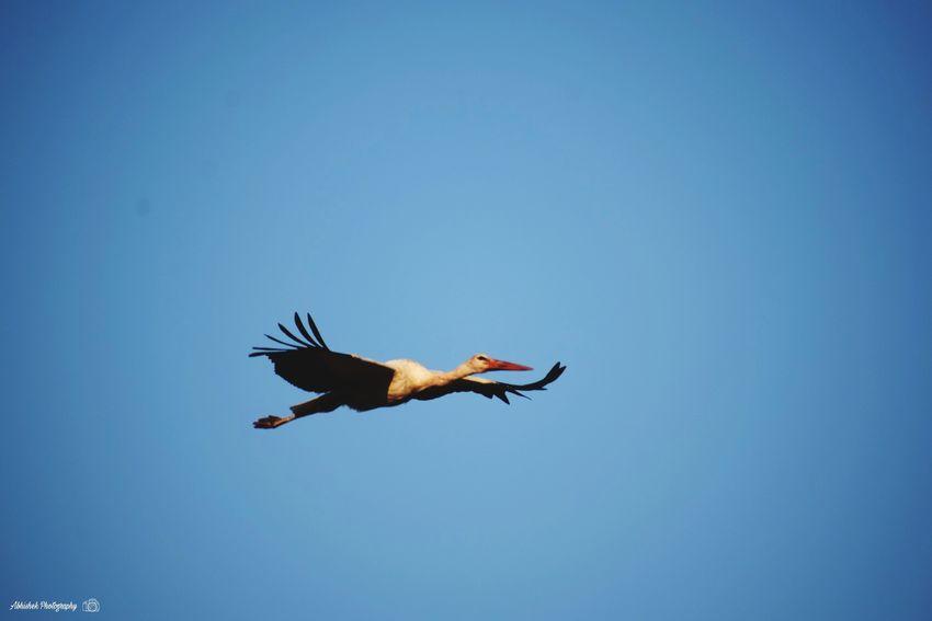 Clicked On Nikon D3300 Animal Body Part Parrot Animal Wildlife Animal Clear Sky Outdoors Day Blue Mid-air Sky