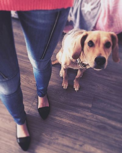 TwentySomething Happy Fit My Favorite  Jeans Again Memories EyeEm Gallery Ilovemydog Cute Pets Hollandsnextdogmodel