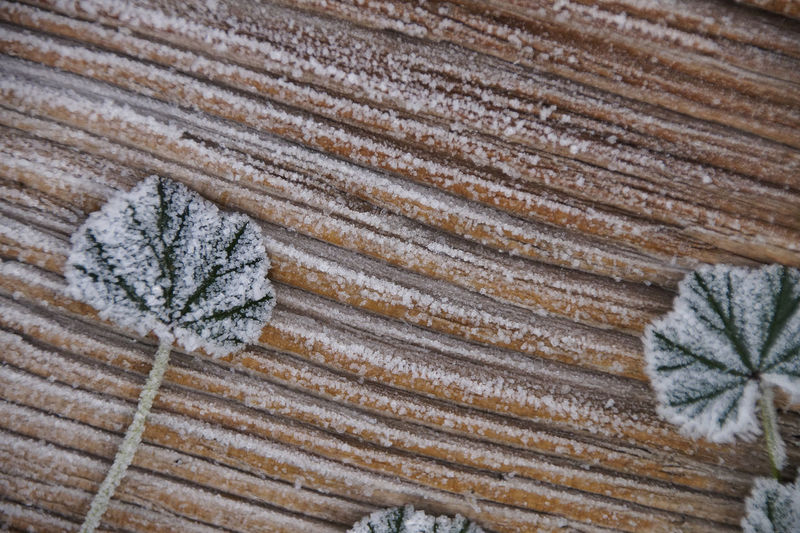Close-up of frosted leaves on table