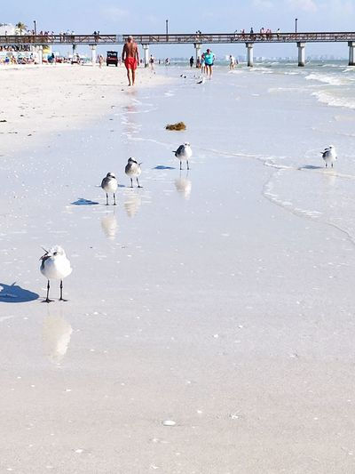 EyeEm Selects Beach Water Bird Sand Nature Animals In The Wild Day Outdoors Large Group Of People Sea Animal Wildlife Men Beauty In Nature People EyeEmNewHere Florida Florida Life Seashore Shore Sommergefühle