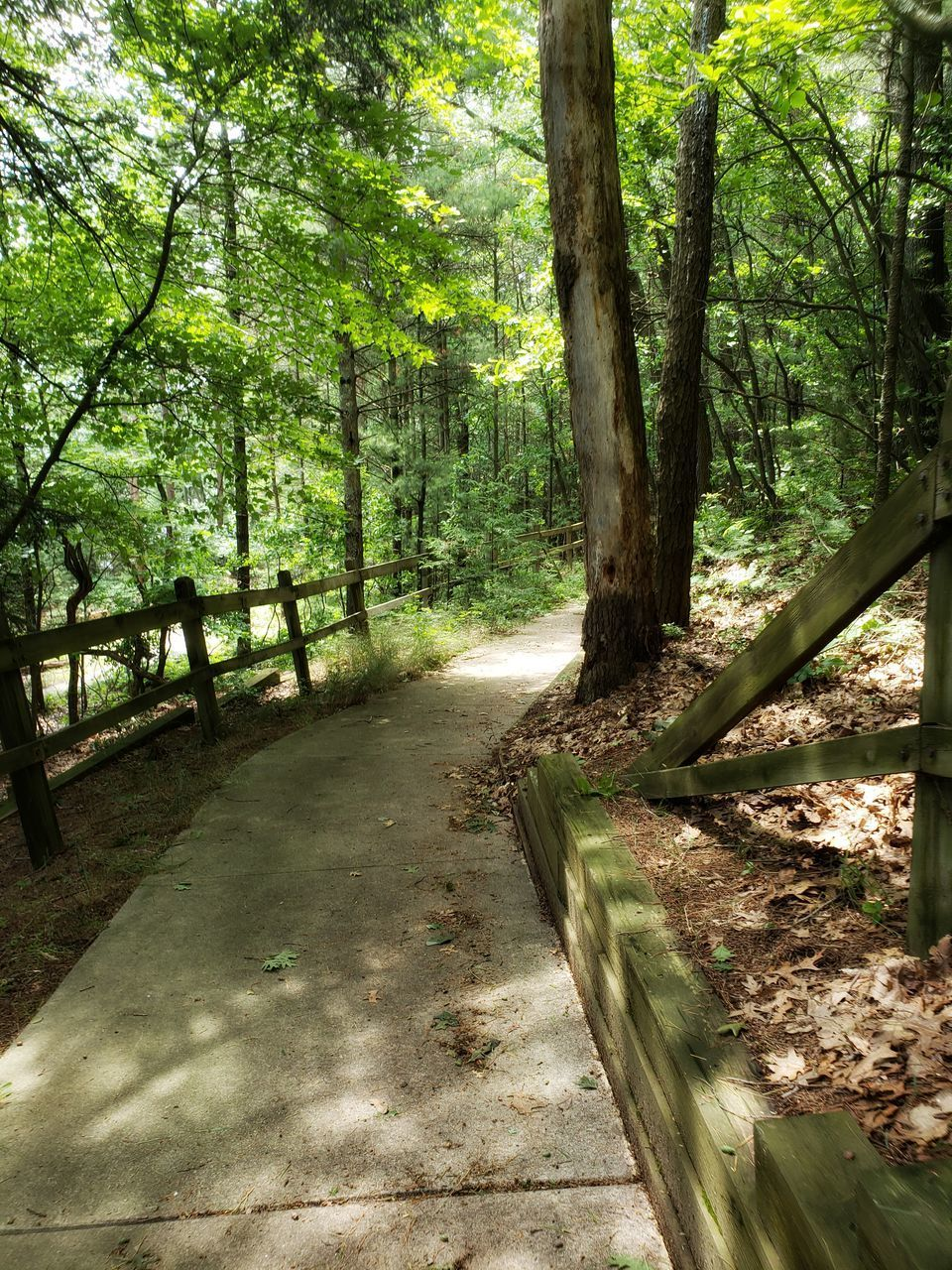 tree, plant, forest, land, direction, the way forward, nature, beauty in nature, trunk, tree trunk, footpath, growth, tranquility, tranquil scene, woodland, no people, day, scenics - nature, sunlight, green color, outdoors, diminishing perspective, wood, trail