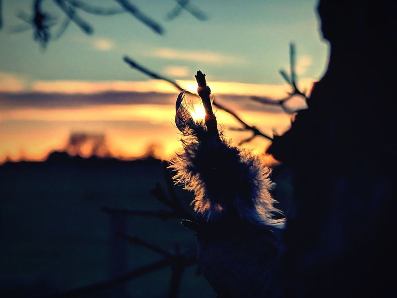 Delication Feather  Sunset Sunsetporn Delicate Agriculture Kent Countryside Countryside Rural Scene Rural Setting Definition Stunning Stunning Nature Beauty In Nature Nature Photography Skyporn Woodporn Multi Colored Edited My Way Orange Sky Silhouette Sunset Nature Outdoors Shadow No People Sky Day Close-up