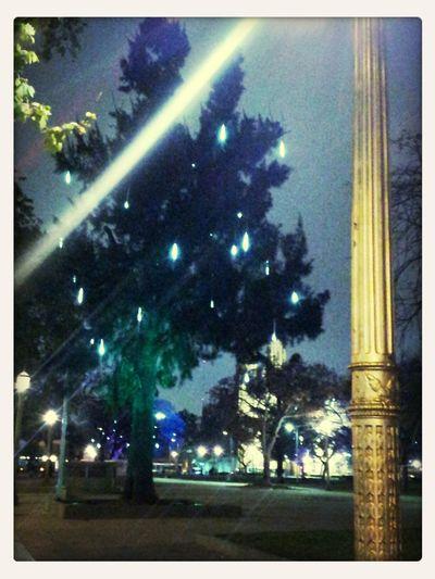 Los árboles Del Presente Luces De Ciudad