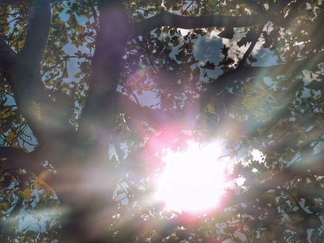 Soaking Up The Sun Hugging A Tree Eye Em Best Shots Nikonphotography Consciousness Divine Light  Eye Em Nature Lover