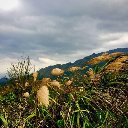 Grass Hiking Nature View Clouds Hike Jiufen Mountain Sight Spirited Away