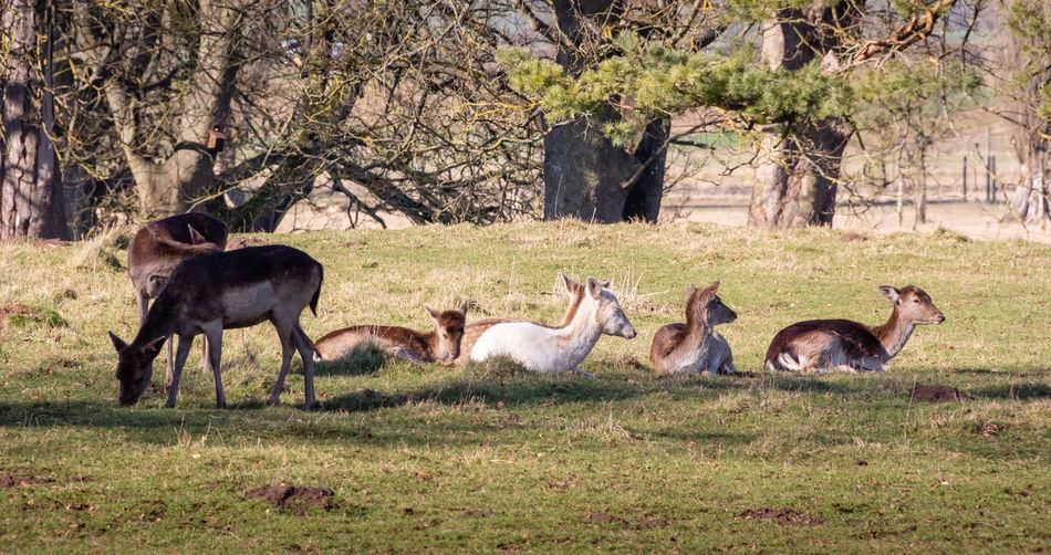 Deer Outdoors Nature Animal Themes Mammal Animal Wildlife No People Animal Herd Herbivorous Group Of Animals Medium Group Of Animals Landscape