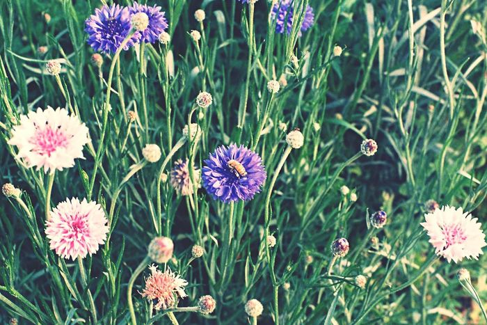 Flower & Bee Beautiful Nature Film Photography Captured Moment EyeEm Korea