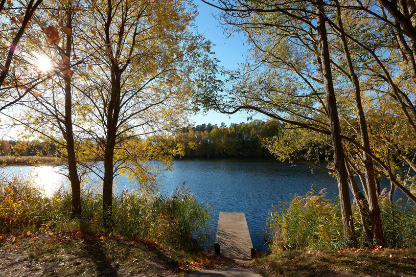 Autumn in Germendorf Brandenburg Tree Plant Water Tranquility Tranquil Scene Lake Beauty In Nature Scenics - Nature Growth Nature Day No People Forest Sky Non-urban Scene Land Idyllic Autumn Outdoors Change