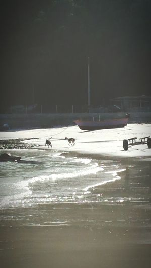 Thailand Dogs Playing Strays Beautiful Beach Travels