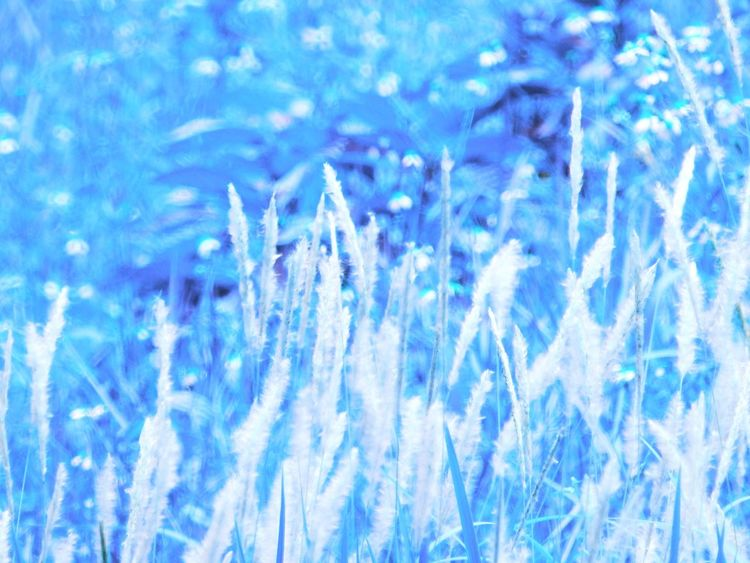 Blue Backgrounds Full Frame No People Nature Close-up Abstract Crystal Cold Temperature Pattern Frozen Beauty In Nature Outdoors Selective Focus Ice Winter Day Snow Light - Natural Phenomenon Abstract Backgrounds
